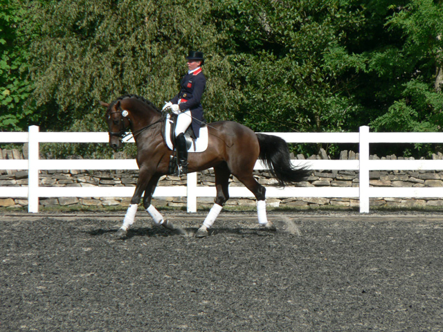 Dressage Warm Up in Outdoor Arena